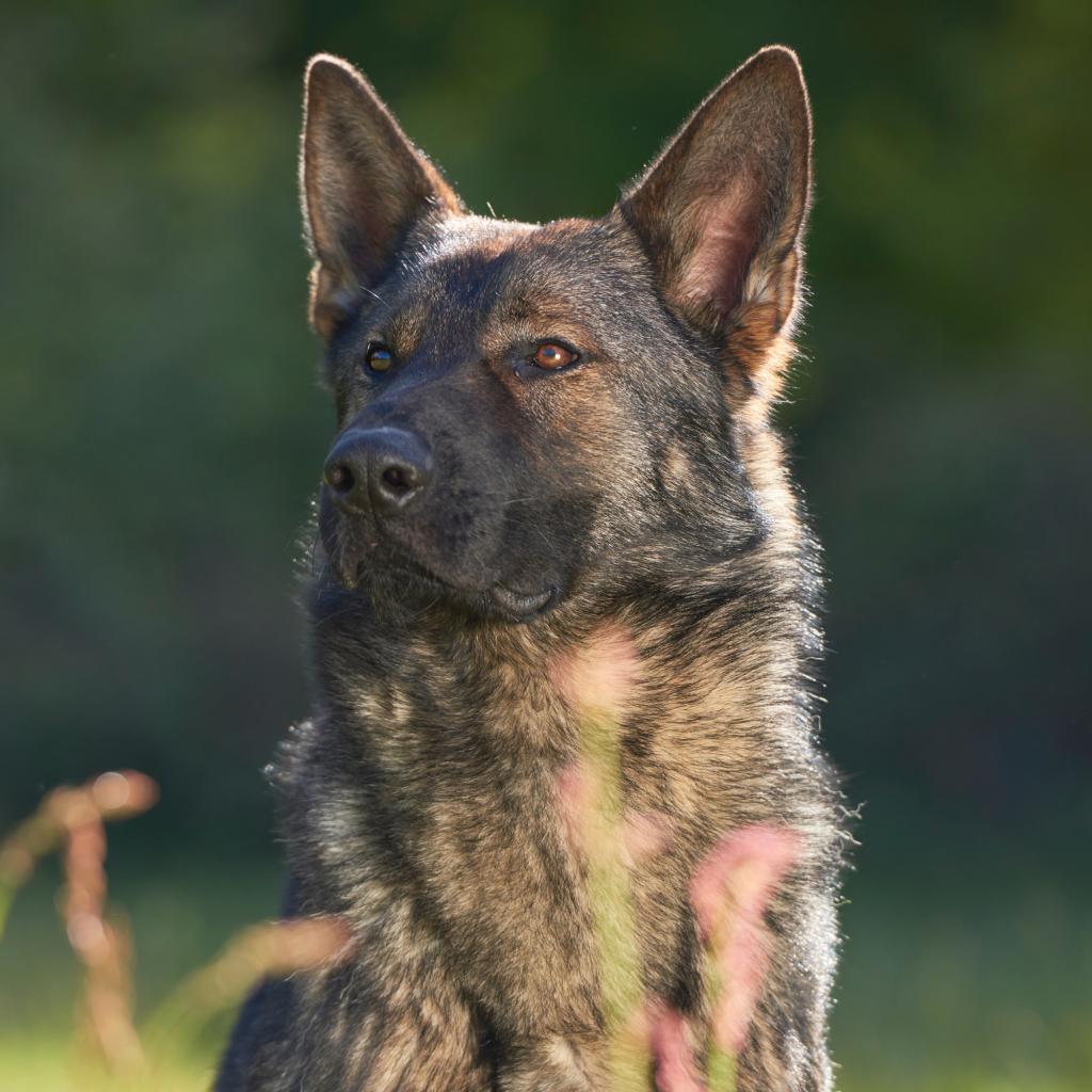 Sable German Shepherd Names