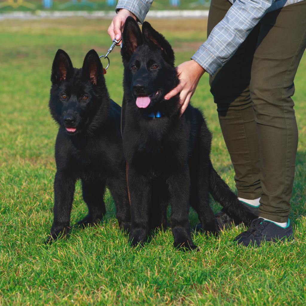 How to Recognize a Quality Dog Breeder