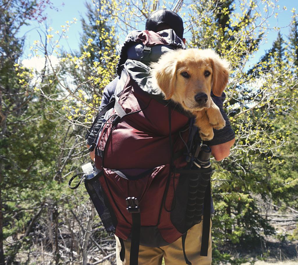 10 Best Dog Carrier Backpacks for Hiking
