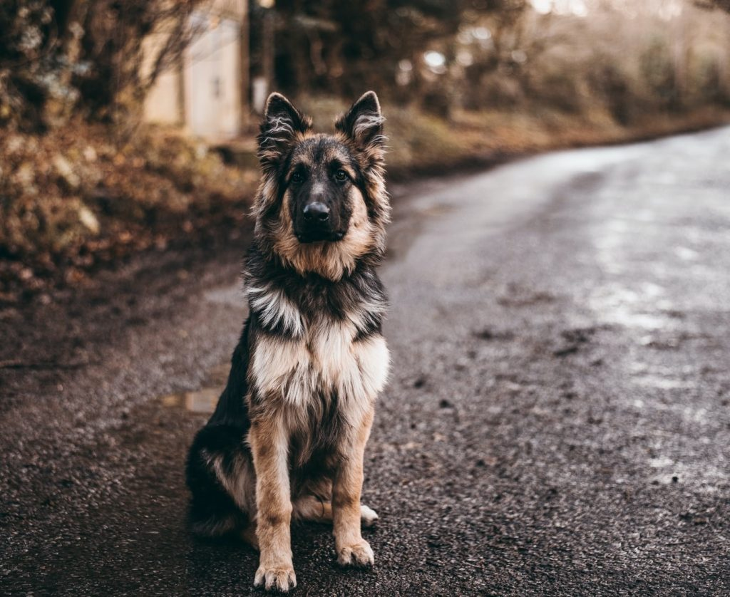 10 Best Movies About German Shepherds You Need to See