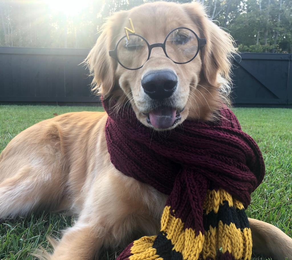 700+ Harry Potter Dog Names
