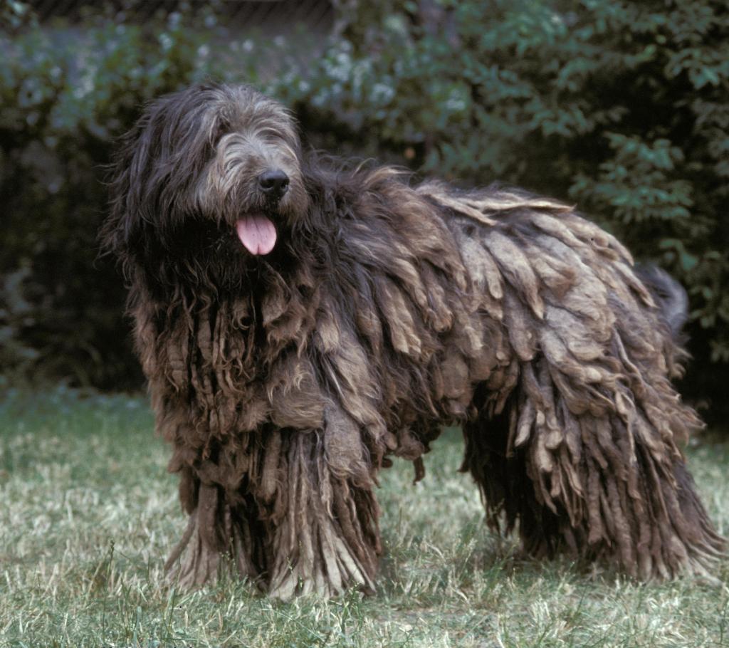 40 Fluffy Dog Breeds That'll Melt Your Heart