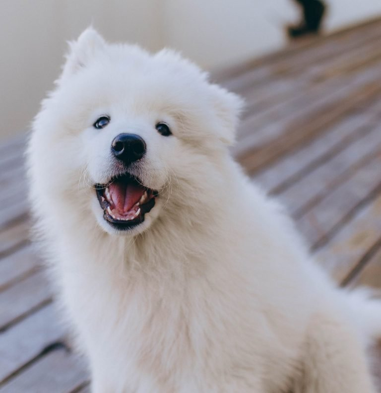 40+ Fluffy Dog Breeds That'll Melt Your Heart (Small, Medium, and Large)