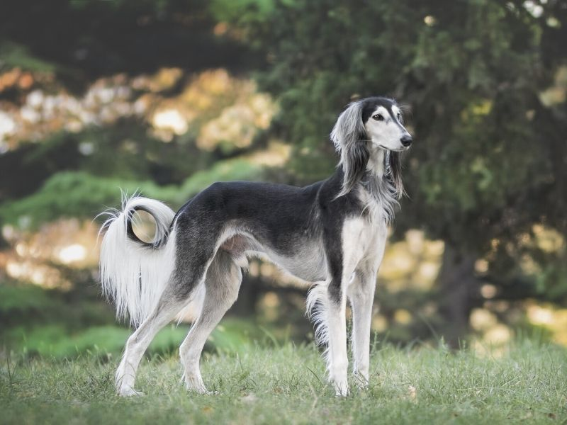 22 Types Of Non-Shedding Dogs