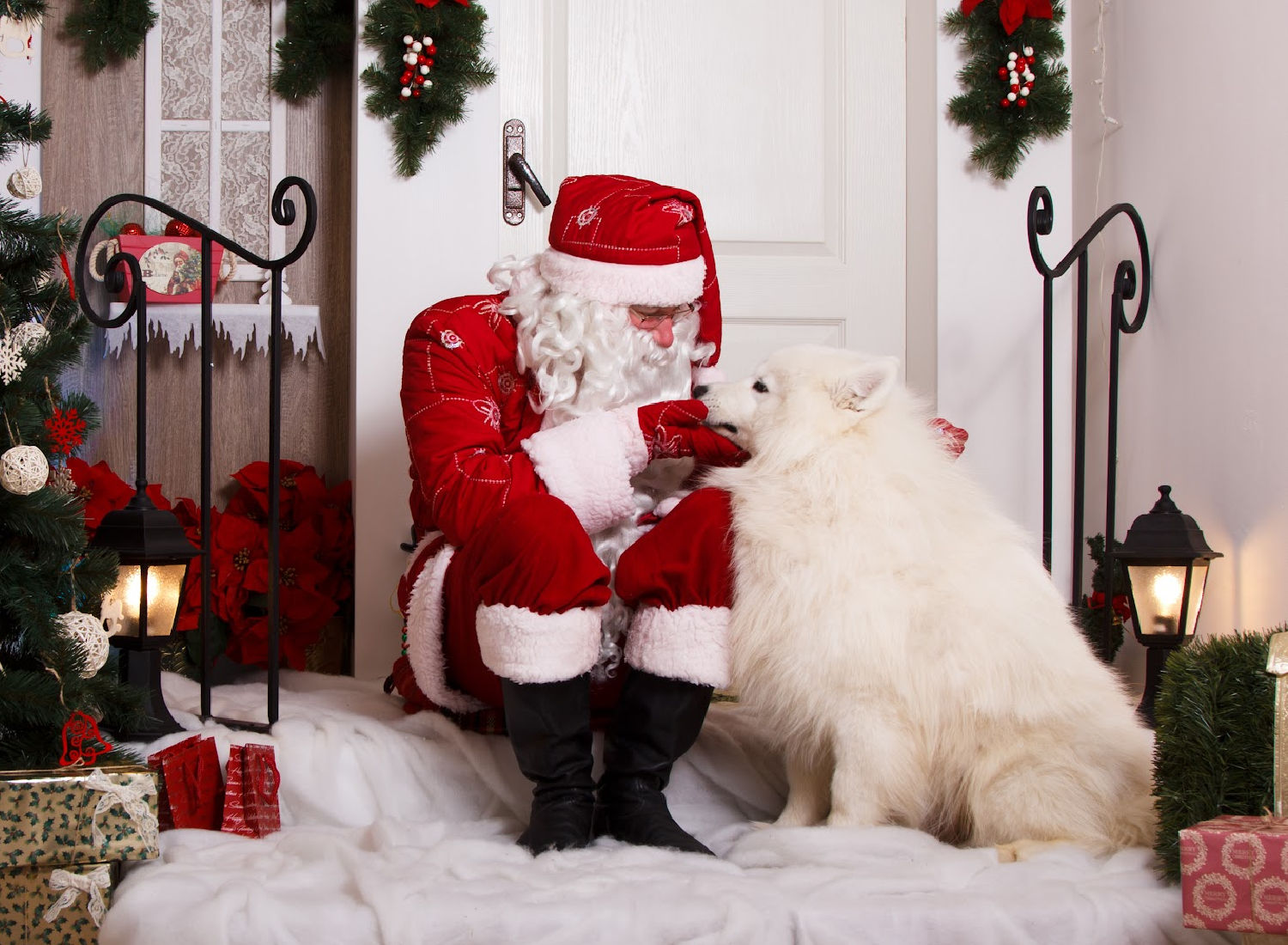 Best Christmas Gifts For Dogs