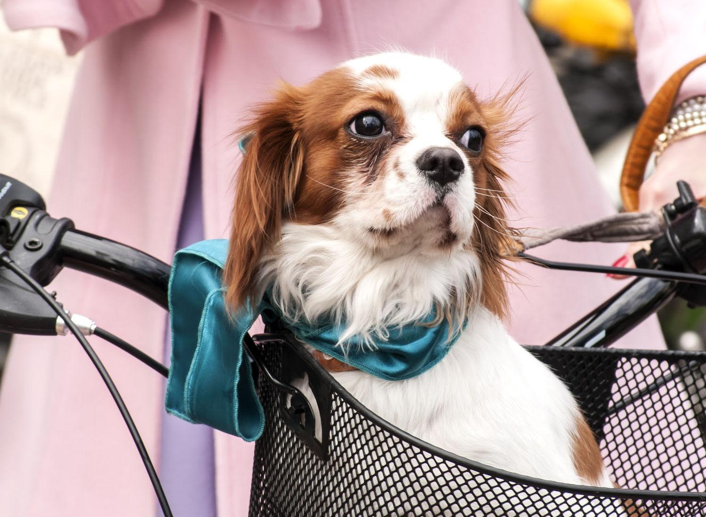 The 8 Best Dog Bike Baskets For 2021